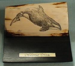 orcinus.orca